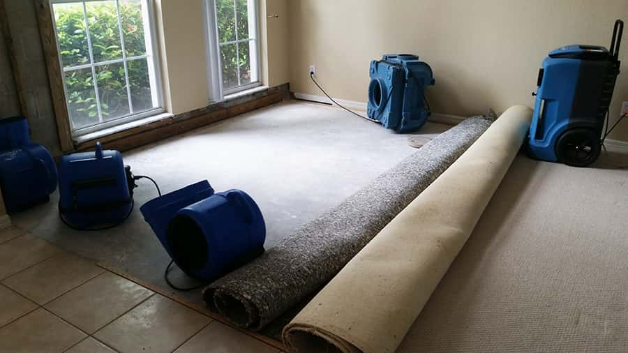 Discover the Armstrong Water Mold Cleanup   Restorations Difference in Naples  FL. Water Damage  Mold   Restoration Services in Naples  FL